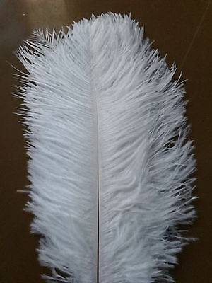 10pcs White Real Natural Ostrich Feather 10-12 inch (25-30cm) Great Decoration
