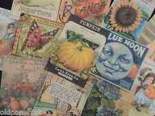 Lot of 12 Vintage FALL Die Cuts | Pumpkins Sunflowers Moon | T2 | Old Paper Cat