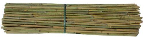 150 Stück  Hochwertige Bambusstäbe Tonkinstäbe Pflanzstäbe 150 cm Ø 12-15 mm