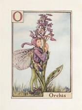 Flower Fairies: Alphabet  O for Orchis Original Vintage Print Cecily Mary Barker