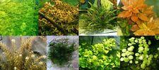 Plantas de acuario. Super lote de plantas de acuario.8 tipos.B.Cultivo sumergido