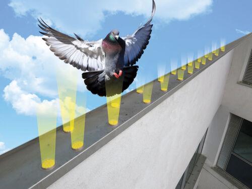 Optique Bird Gel Répulsif dissuade problème oiseaux 24 Pack-Birds voir flammes