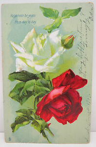 USA-Postcard-Ak-Roses-Roses-Flowers-Pacheco-1907-Truck-S-A2310