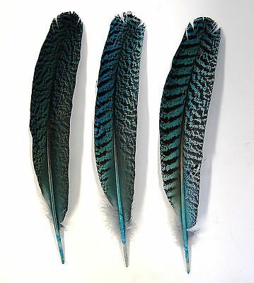 """3 Pcs PEACOCK QUILLS 10""""-14"""" Dyed TURQUOISE Feathers; Costume/Bridal/Halloween"""