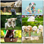 thumbnail 7 - Doodlecards Pack of 10 Standard Size Dog Lovers Birthday & Blank Cards
