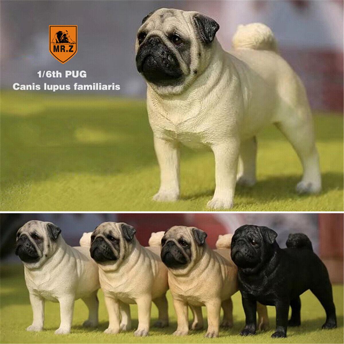 Mr.Z 1//6 Pug Dog Pet Figure Canis lupus familiaris Animal Toys Puppy Collector