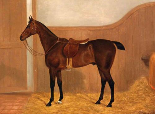 CHENPAT559 fine huge hand painted modern animal horse oil painting art on canvas