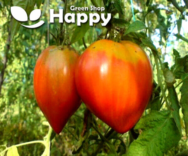 TOMATO HERODES - 150 SEEDS - OXHEART TYPE - Vegetable seeds - Very Easy To grow