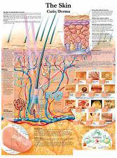 Cartel médico A3-la piel humana (libro de texto de anatomía Patología Médico Foto)