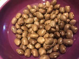 Brown Greasy Bean Seeds 100 seeds is approximately 1 oz