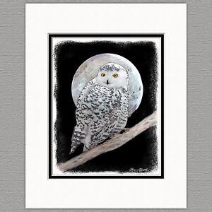 Snowy-Owl-Original-Art-Print-8x10-Matted-to-11x14