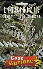 GLYCYRRHIZA GLABRA  confezione/pack 10-15 semi seeds Liquirizia Liquorice