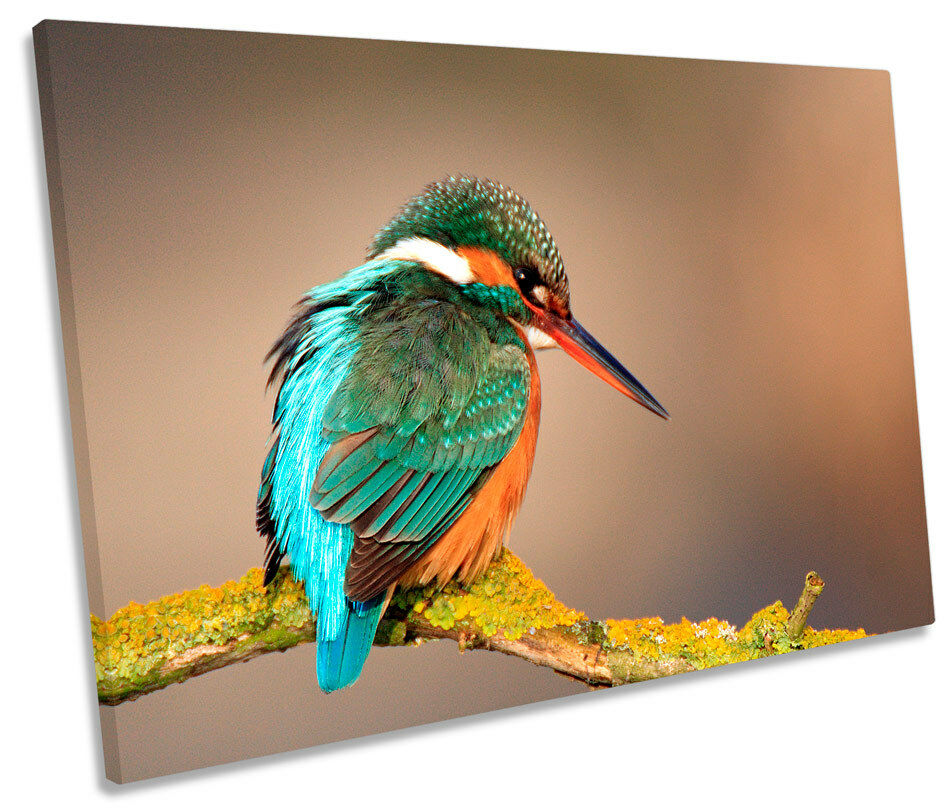 Kingfisher Bird Wildlife SINGLE CANVAS WALL ART Print Picture