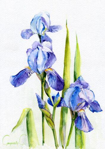 Iris PRINT Purple Flowers Print of Original Watercolor Painting Blue Pink