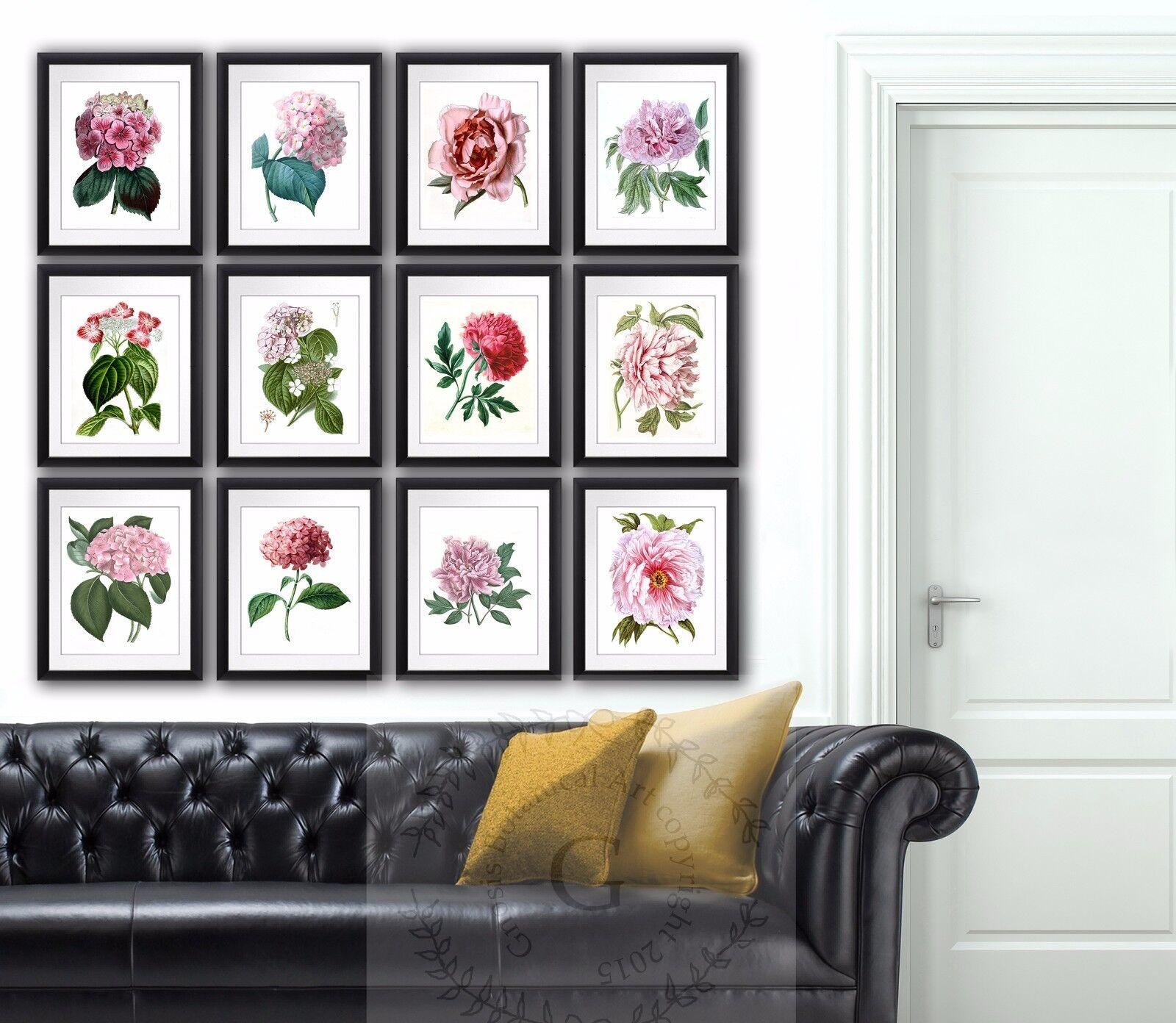 rose Peonies hydrangea flower botanical illustrations set of 12 wall Hanging