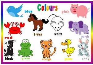 COLOURS & ANIMALS - A4 LAMINATED POSTER- FIRST LEARNING- TODDLER ...
