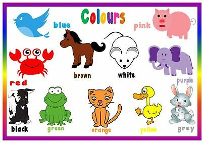 EYFS A4 Laminated poster Wild Animals SEN// Toddler// first learning NURSERY