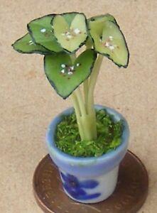1:12 Scale Green Beauty Plant In A Ceramic Pot Dolls House Garden Flower P4