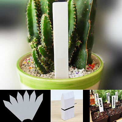 """100 PCS 4"""" White Plastic Plant Seed Labels Pot Marker Nursery Garden Stake Tags"""