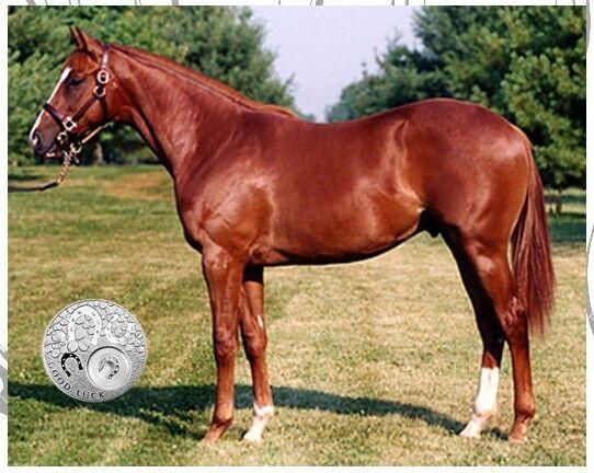 "Genuine OZ Horse False Tail 80CM 32"" Chestnut False Horse Tail EXTENDED"
