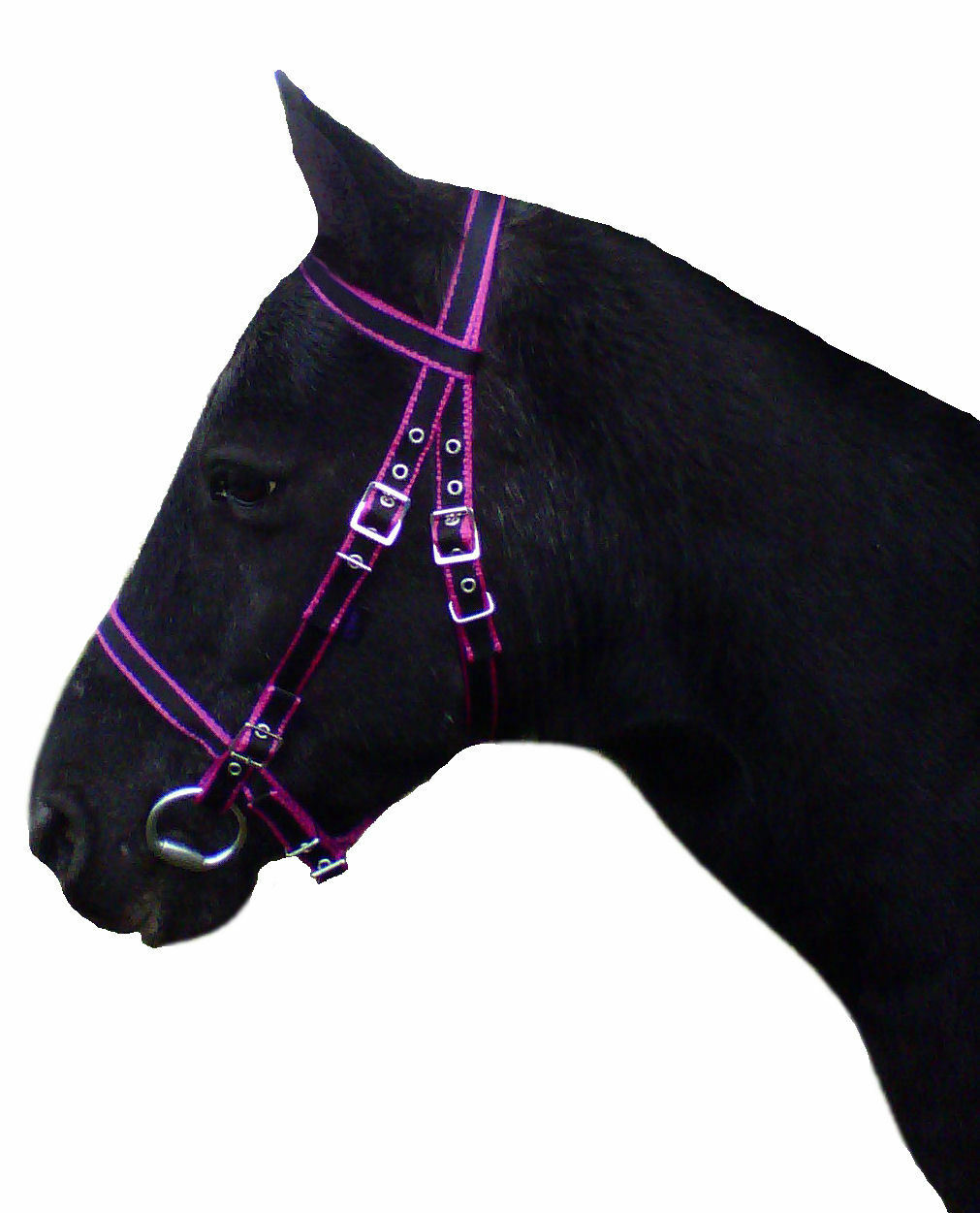 Official Libby's DARTMOOR Bridle in Miniature, Small Pony, Pony, Cob, Full