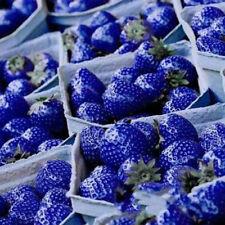 1Bag Home Garden Blue Strawberry Fruit Plant Seeds Organic Heirloom Vegetables