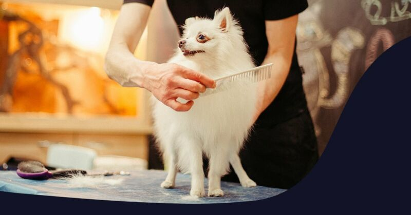 Dog Grooming Cape Town - Pet Grooming and Hygiene Treatments, Dog Daycare – Cat Grooming, Cape Town