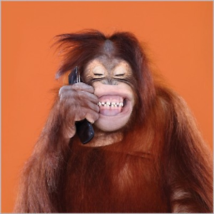 """Abacus Cards Orangutan /""""You Orang?/"""" Blank Card 4870"""