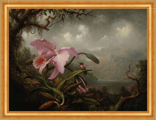 Orchid and Hummingbird Martin Johnson Heade Orchidee Vogel B A3 02861 Gerahmt