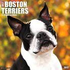 Just Boston Terriers - 2017 Calendar 30 X 30cm