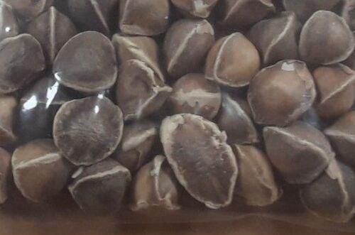 Moringa Seeds Viable Moringa Oleifera