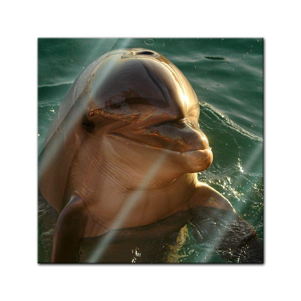 Immagine di vetro-Delfino vetro-Delfino vetro-Delfino 71cf57