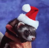 Marshall Ferret Santa Hat