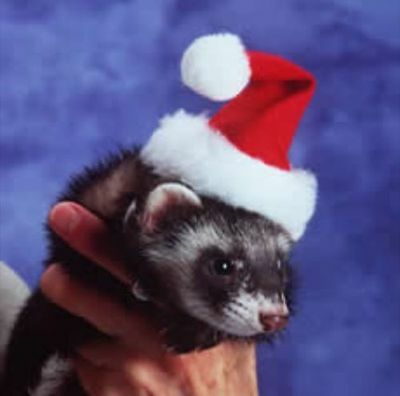 Marshall Ferret Santa Hat