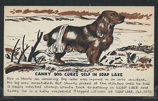 WA Soap Lake LITHO 1952 SHORTY a CANNY 3 LEGGED DOG CURES SELF in SOAP LAKE