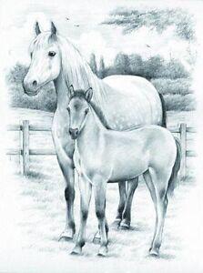 Sketching Skizzieren Malen Mit Bleistift Pferd Und Fohlen