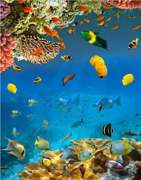 3D Fisch Wasser sea Stein066 Fototapeten Wandbild Fototapete Bild Tapete Familie