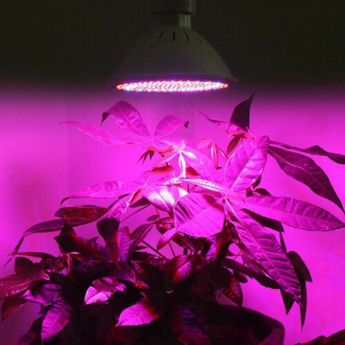 LED Plant Grow Light lamp seeds Growing Lights Bulbs for Hydro indoor E27 flower