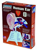 Lindberg Human Ear Anatomically Accurate Model Science Kit Mint In Box