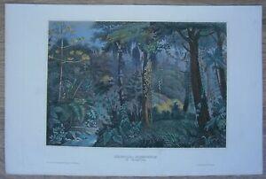 1856-Meyer-print-TROPICAL-FOREST-BRAZIL-24