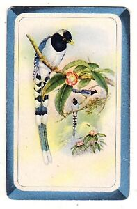 BLANK-BACK-BIRDS-FINCHES-2b-Single-Vintage-Swap-Playing-Card