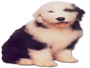 OLD-ENGLISH-SHEEPDOG-CUT-OUT-PUPPY-CARD