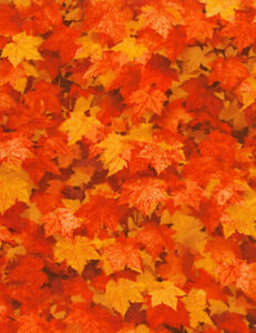 Timeless-Treasures-Nature-Fire-Tossed-Leaves-100-cotton-Fabric-by-the-yard