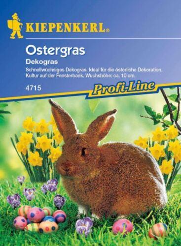 10cm hohes Dekogras Grasmischung Kiepenkerl Ostergras 4715 für Fensterbank ca