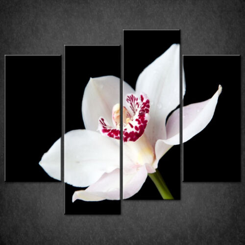 WHITE ORCHID FLOWER CASCADE CANVAS WALL ART PRINT PICTURE READY TO HANG
