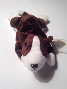 TY Beanie Baby - BRUNO the Bull Terrier Dog (8.5 inch) - MWMT's Stuffed Animal