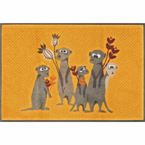 Dry Bo Paco /& co Wash Cats on appletrees felpudo lavables suricata pepe