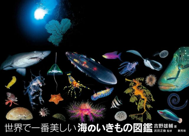 Amazing and beautiful marine creatures Field guide Picture book Japan FS NEW