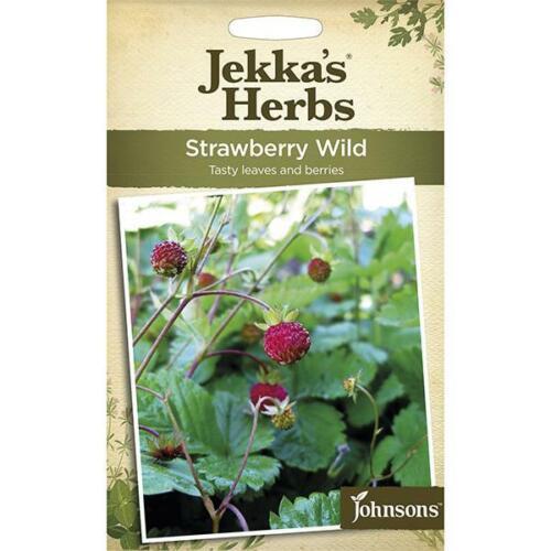 Johnsons Jekka Kräuter Erdbeere Wild Samen AVG 500 Samen
