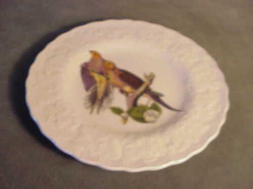 ENGLISH ALFRED MEAKIN BIRDS OF AMERICA DESSERT  PLATE #17 CAROLINA TURTLE DOVE